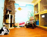 Luxury Cat Boarding - Truckee-Tahoe Pet Lodge