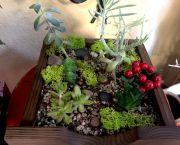 Succulent Planters - Enchanted Florist