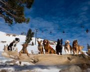 Squaw Dogs - Gallery Keoki