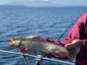 Tahoe Sport Fishing, Fishing Report - October 14