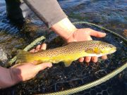 Trout Creek Outfitters, TCO Fishing Report 10/28/20