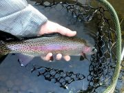 Trout Creek Outfitters, TCO Fishing Report 9/7/20