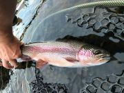 Trout Creek Outfitters, Fishing Report 8/1/20