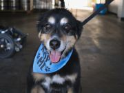 South Lake Brewing Company, Monthly Yappy Hour