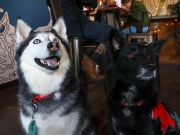 South Lake Brewing Company, Yappy Hour