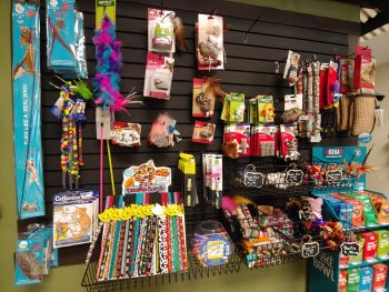 EarthWise Pet, South Lake Tahoe, Interactive Toys for Cats & Kittens