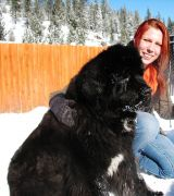 Truckee-Tahoe Pet Lodge photo