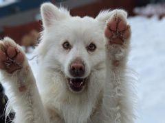 Truckee-Tahoe Pet Lodge photo