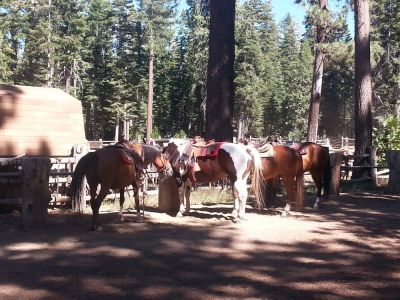 Zephyr Cove Stables photo