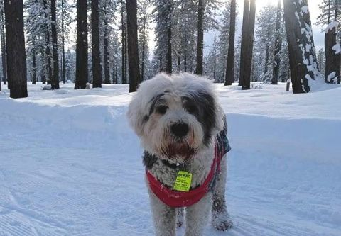 Tahoe Cross Country Center, Dog-Friendly Cross Country Trails