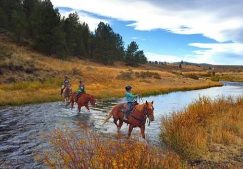 Lake Tahoe Sightseeing Cruises, Piping Rock Equestrian Trail Rides