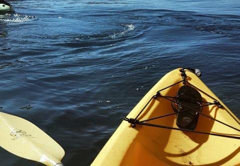 Adrift Tahoe, Kayak Rentals