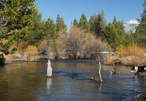 Sierra State Parks Foundation, Washoe Meadows State Park