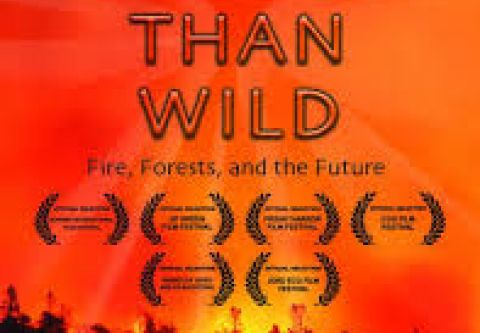 Tahoe Art Haus & Cinema, Wilder Than Wild: Fires, Forests and the Future   Virtual Cinema