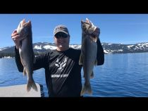 Lake Tahoe Mackinaw Trout
